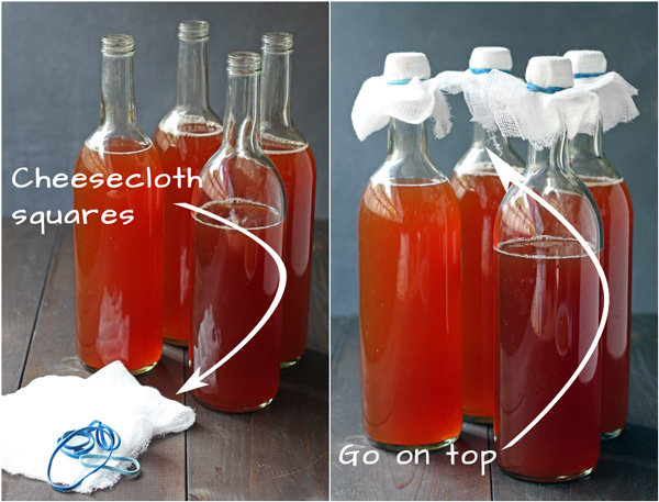 How to Make Kombucha Step 8 | http://tiaskitchen.com/make-kombucha-step-step