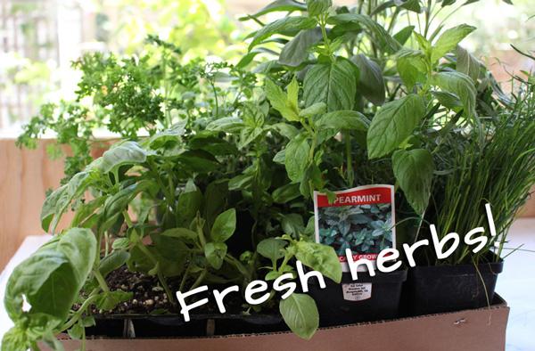 Fresh herbs for a squirrel-proof herb garden.   tiaskitchen.com/plant-herb-garden-keep-squirrels-out